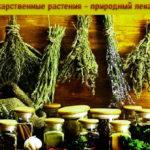 Как правильно заготовить лекарственные растения, используемые в народной медицине.